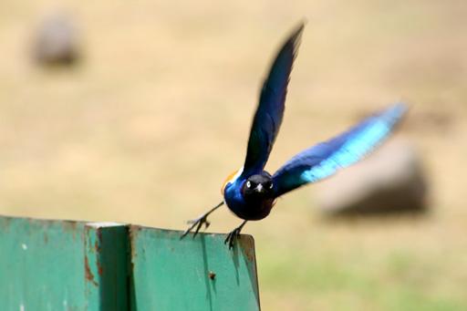 uccello-in-volo.jpg