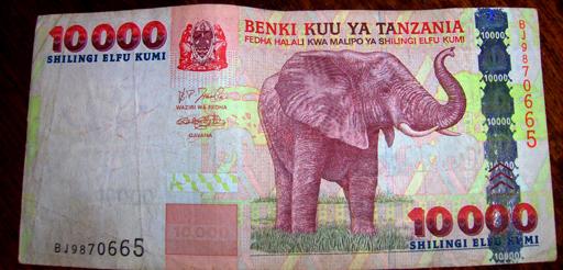 elefanti-rosa.jpg